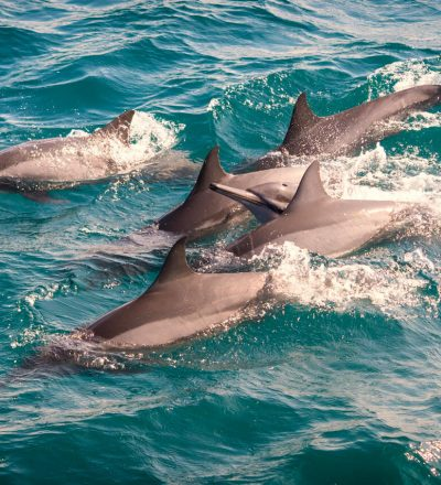 whale_watching_dolphin